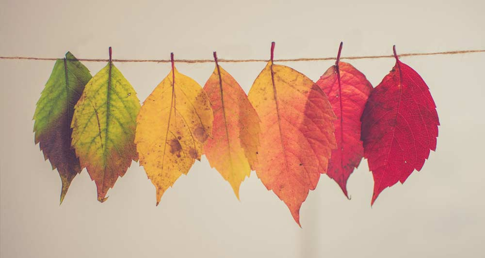 Confronting Life – Understanding The Season You're In